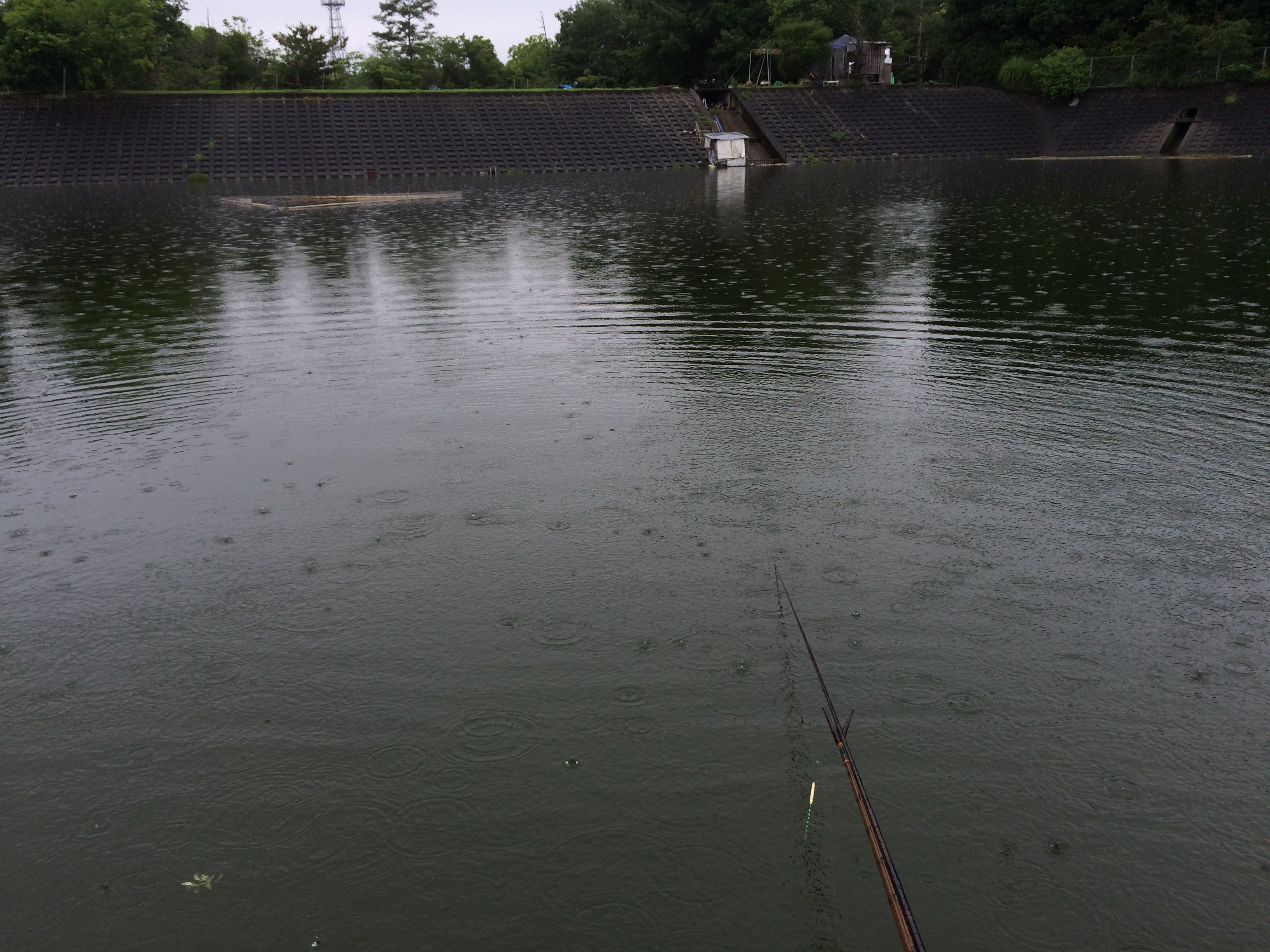 野池(2015.07.08)