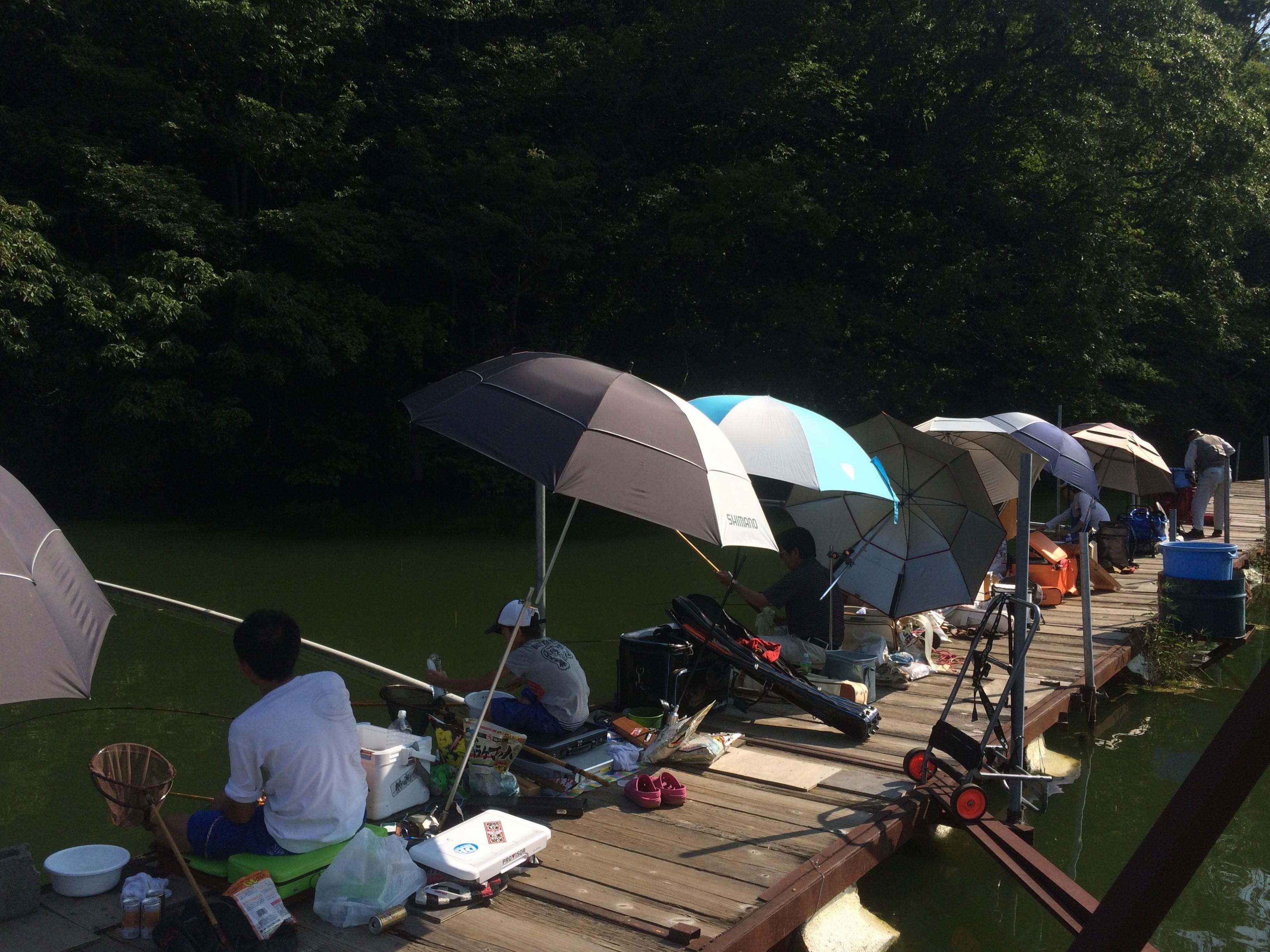 真夏の分川  遊遊会例会(2015.08.09)