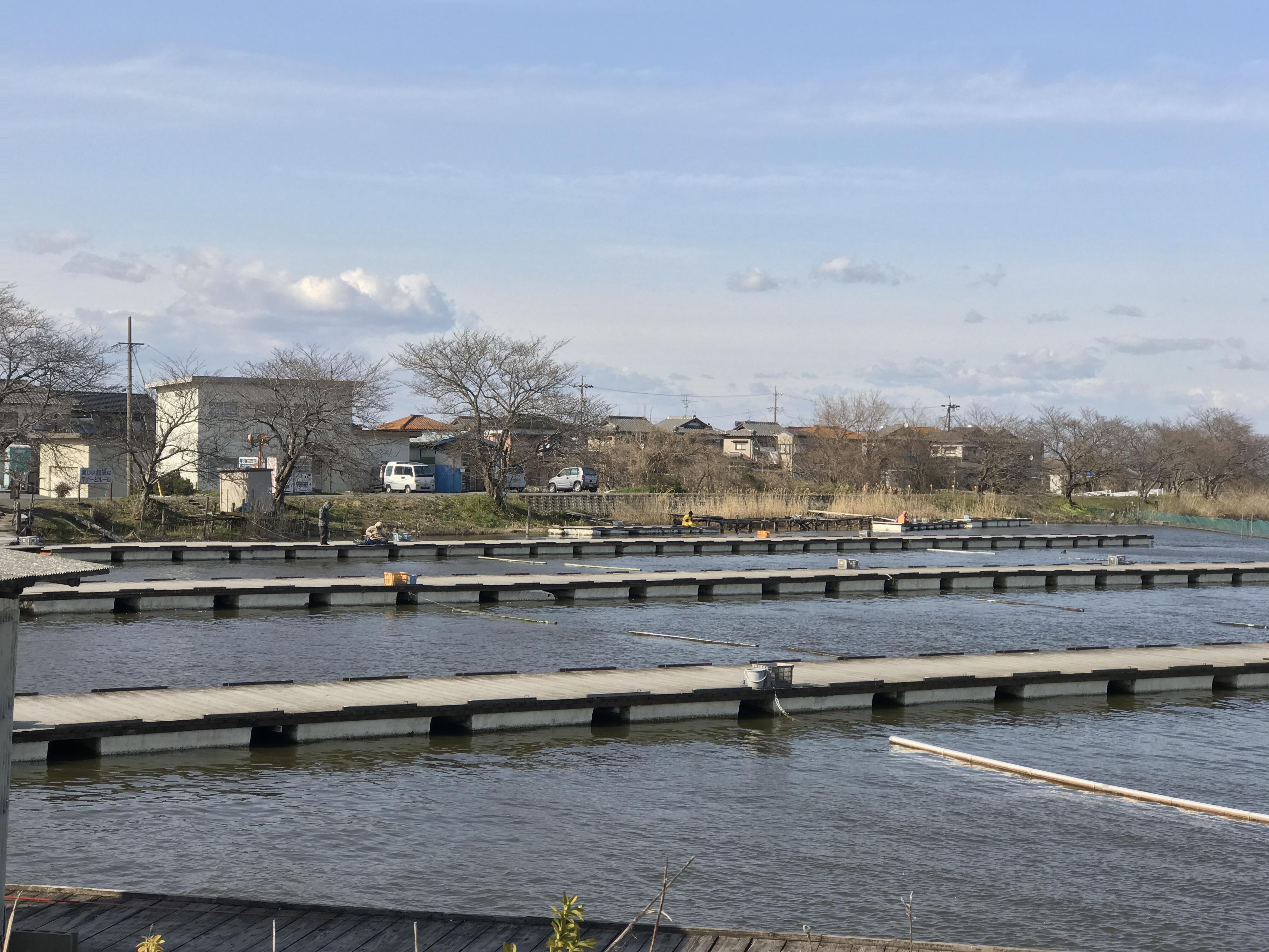 暴風の つつじ池へ(2017.03.24)