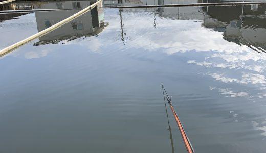 茨木新池(2018.12.31) 釣り納め