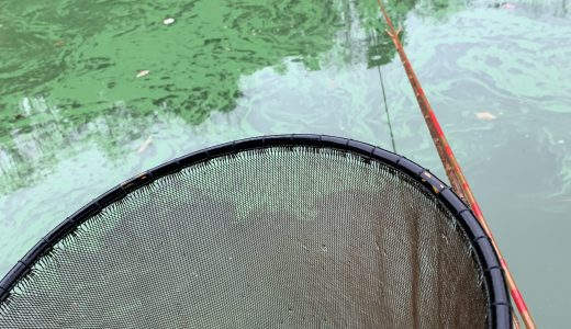 天神釣り池(2018.12.20)
